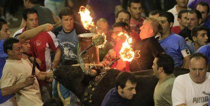 Toro embolado en la fiestas patronales de Nules (Castellón).