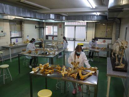 Prácticas de Anatomía de primero de Veterinaria el pasado jueves en la Universidad Complutense de Madrid.