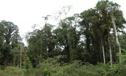 El bosque deteriorado de una montaña de la isla Taliabu.