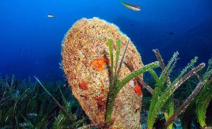 Imagen de una nacra en el mar Mediterráneo.