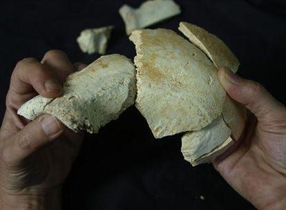 Fósiles de parietal y frontal descubiertos en la actual campaña de excavación de Atapuerca