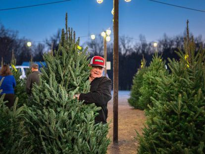 El aumento en la demanda de árboles de Navidad en EE UU ha elevado los precios de este adorno en Canadá. En la imagen, una granja en Carolina del Norte.