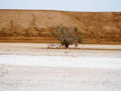 Fragmento del documental 'Los desiertos de Sonora'. En vídeo, tráiler del documental.