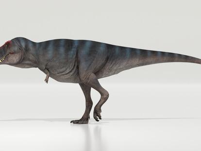 Reconstrucción de un 'Tiranosaurio Rex'.
