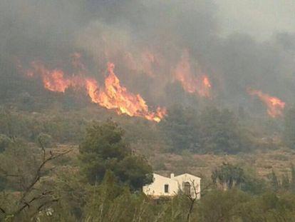 El fuego quema el monte a los pies de El Montgó, en Dénia.