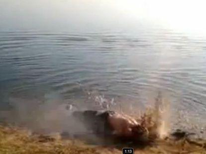 Captura del vídeo que muestra una ejecución sumaria de un teniente coronel sirio detenido por las milicias rebeldes.