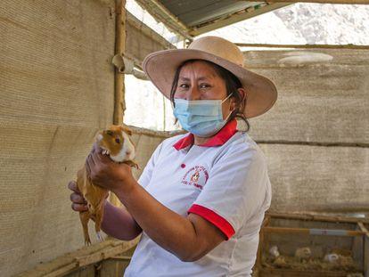 Gisela Ramírez preside la Asociación Peruanitas Empeñosas, con 14 socias que crían cuyes y venden su carne desde la sierra limeña.