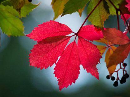 Equinoccio de otoño en el hemisferio sur.