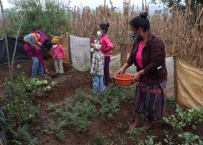 La familia Mejía en su huerto.