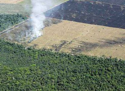 Una de las áreas antes selváticas de la Amazonia convertidas en campos de cultivo, en el Estado de Pará.
