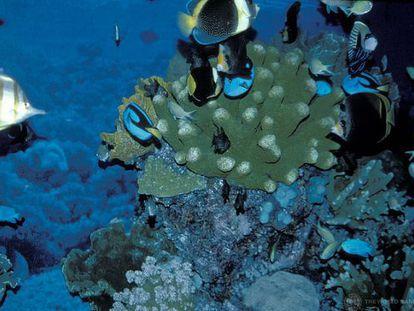 Arrecife de coral en Indonesia.