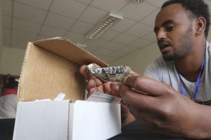Un conservador estudia la mandíbula en los laboratorios del Museo Nacional de Etiopía.