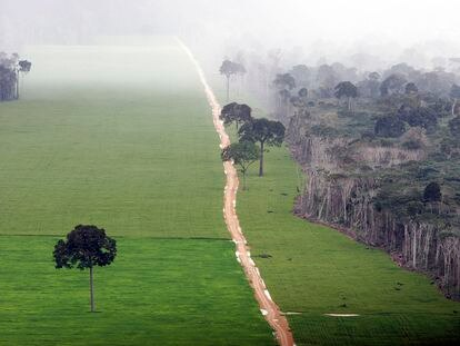Plantación de soja en la selva amazónica, cerca de Santarém, en Brasil.