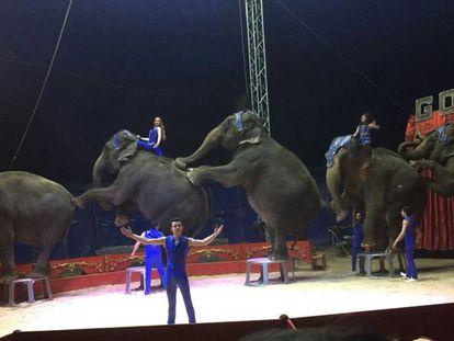 Elefantes del Circo Gottani, en una foto del 4 de abril 2018.