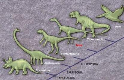 Los dinosaurios se originaron en lo que hoy es América del Sur y pronto divergieron en linajes como el del triceratops, el apatosaurio y el tiranosaurio rex, antes de expandirse por todo el mundo hace 220 millones de años.