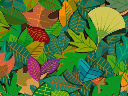 Ilustración de Chiara Caproni para la publicación 'Descubriendo los bosques'.