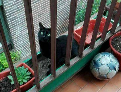 'Saba', la gata que no es cuqui.