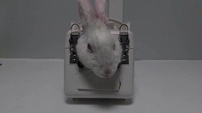Un conejo que sale en el vídeo publicado por Cruelty Free International.