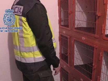 Celdas habilitadas para gallos, durante la operación policial en Cádiz. En vídeo, resumen de la acción policial.