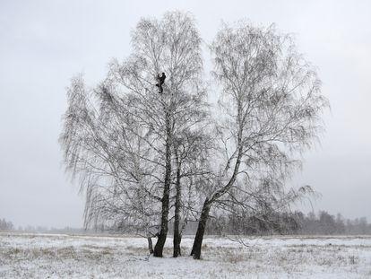 Alexei Dudoladov, en lo alto del abedul en el que encuentra conexión móvil, en Omsk, una región de Siberia