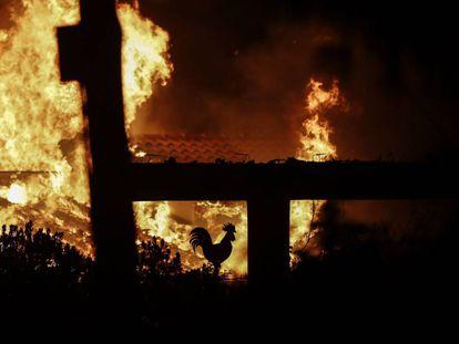 Un incendio asuela este lunes Mati, un suburbio al noreste de Atenas, este lunes.