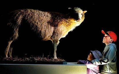 Dos niños observan a Dolly, la oveja clonada.