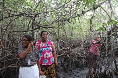 Rosa Martínez, junto a su madre María Pilar y su prima Verónica, recorren el manglar de la isla Punta Arenas en busca de cangrejos para la cena antes de que suba la marea.
