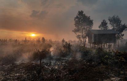 El humo se eleva durante los incendios de bosques y plantaciones en Tanjung Taruna, subdistrito de Jabiren Raya, en Kalimantan Central, Indonesia.