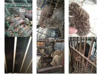 Imágenes de animales vivos a la venta en el mercado de Huanan tomadas por los científicos chinos.