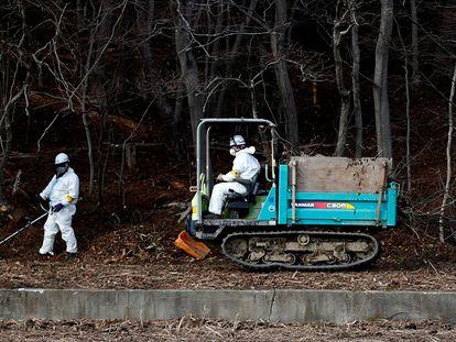 Operarios descontaminado un bosque en los alrededores de Fukushima en febrero de 2015.