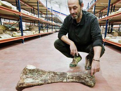 Francisco Ortega con una ulna (el equivalente en mamíferos es el cúbito) de un saurópodo titanosaurio en la nave de Cuenca.