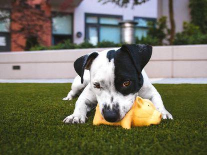 Un cachorro juega con un peluche en el jardín.