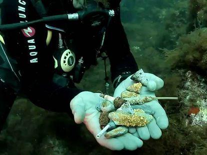 Un submarinista muestra varias bujías que un pulpo ha acumulado en su nido.