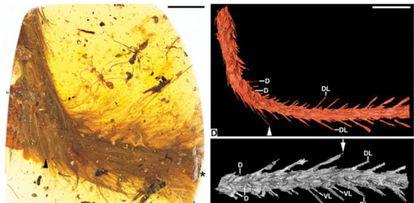 Examen del trozo de ámbar en el que ha sido hallada la cola emplumada de dinosaurio.