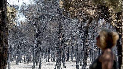 Una de las zonas quemadas cercanas al camping Doñana.