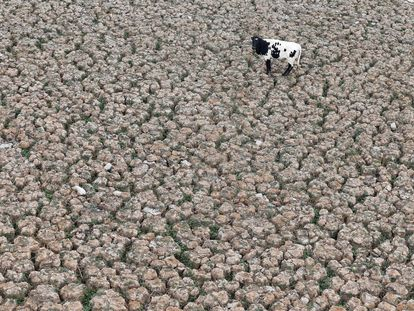 Imagen de la laguna de Aculeo en Paine (Chile) en enero de 2019 totalmente vacía por la sequía.