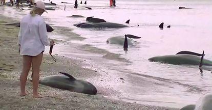 Una turista observa un bebé de ballena muerto en la arena.
