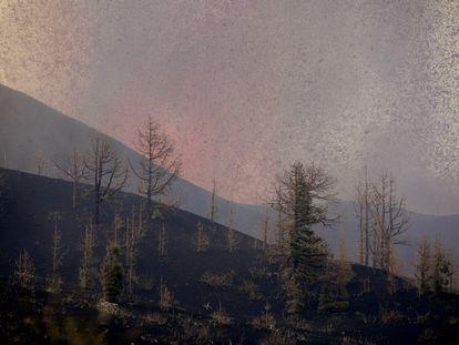 Un bosque arrasado por la lava del volcán de La Palma, en la zona de El Paso.