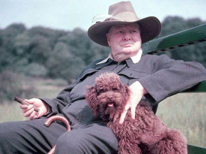 Winston Churchill en su finca de Chartwell (condado de Kent, Inglaterra) en 1950.