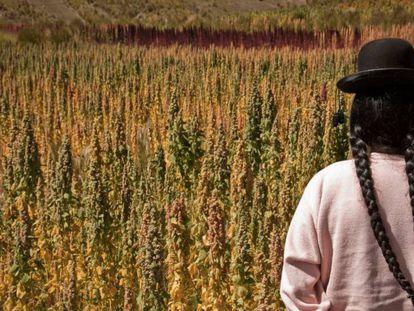 Una mujer cosecha quinua en Perú.