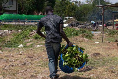 Daniel vive cerca de la playa de Dunga. En la imagen recoge jacintos para alimentar el digestor de biogás.