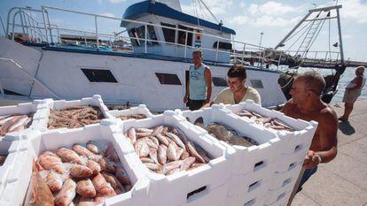 Pescadores desembarcan sus capturas en el puerto de Fiumicino, a unos 40 kilómetros de Roma.
