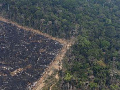 La deforestación, los incendios y el cambio climático acercan a la cuenca amazónica a una transformación irreversible