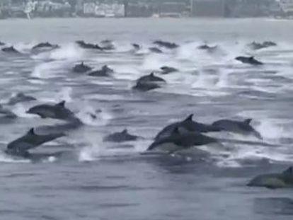 Un surfista graba en vídeo la insólita imagen cuando navegaba en la costa de Laguna Beach