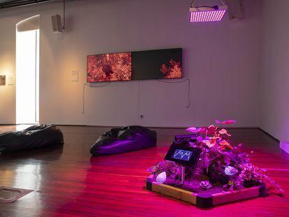 Instalación de Anna Rierola en el festival ECOSS en Arts Santa Mònica.