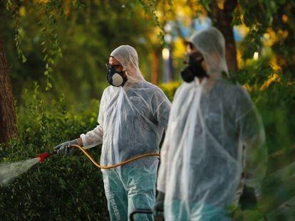 Labores de fumigación contra mosquitos en La Puebla del Río (Sevilla).