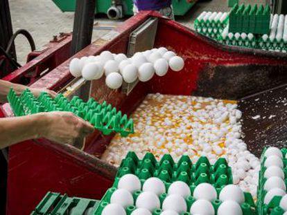 Francia y Reino Unido, los dos últimos en detectar partidas afectadas por un pesticida