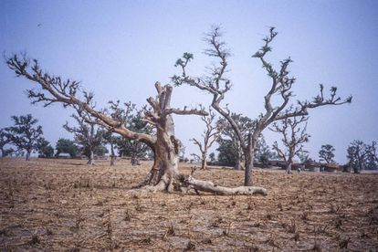 África tiene 700 millones de hectáreas degradadas, el equivalente a la superficie de Australia.