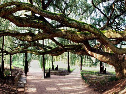 Arboretum de la Vallée-aux-Loups en los Altos del Sena, uno de los favoritos de Marco Martella.