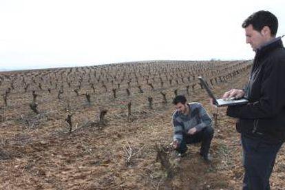Dos trabajadores de Emilio Moro en los viñedos de la bodega.